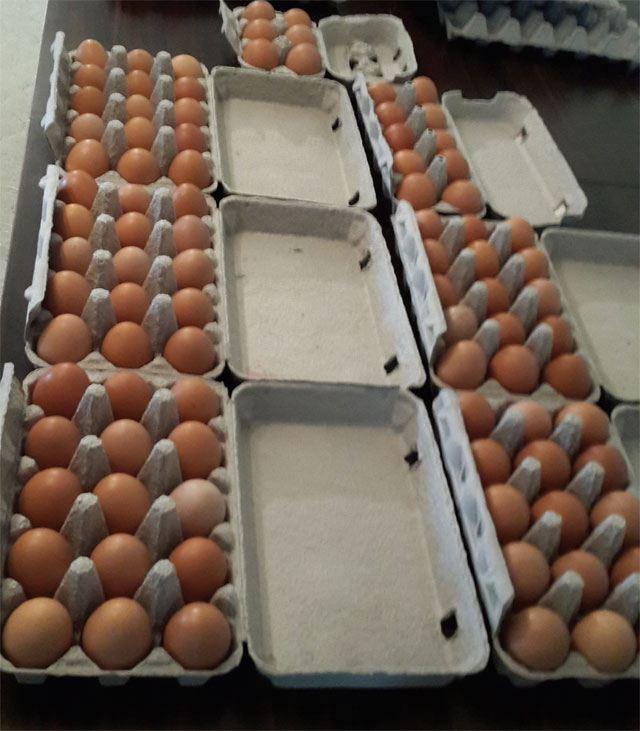 Motoro Yumurta Testi Yapılır Mı? 10. İçerik Fotoğrafı